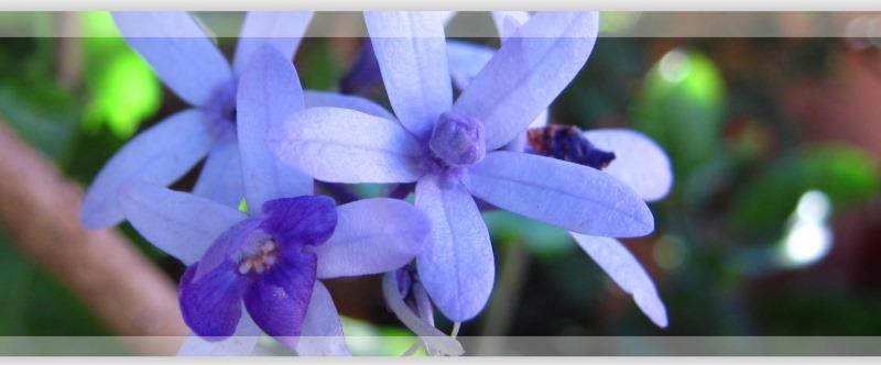 una-visita-al-cielo-flor