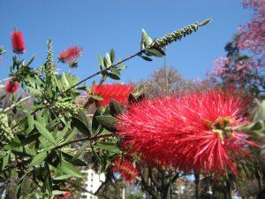 flores-deoao42