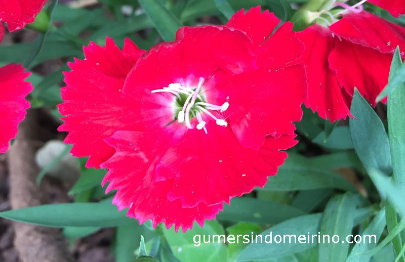 gumersindomeirino-salmo-119