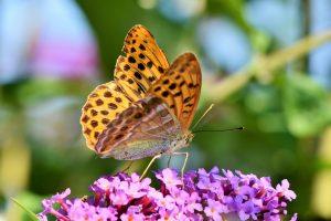 butterfly-3559186_960_720